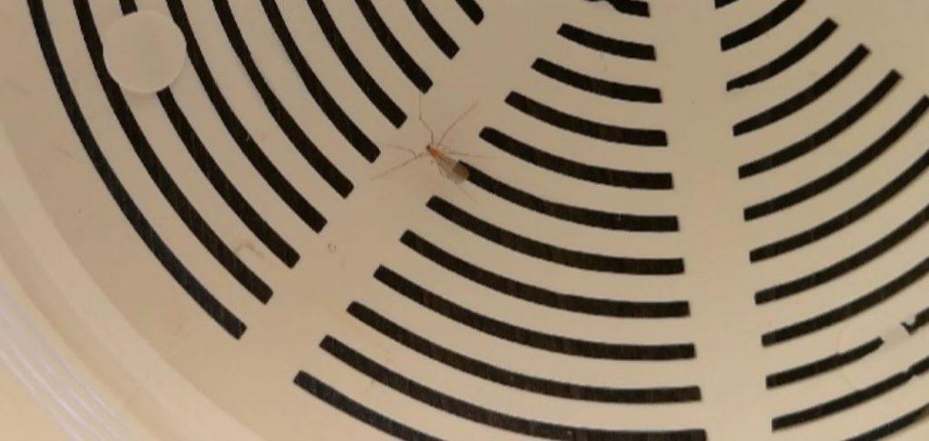 Röd mygga